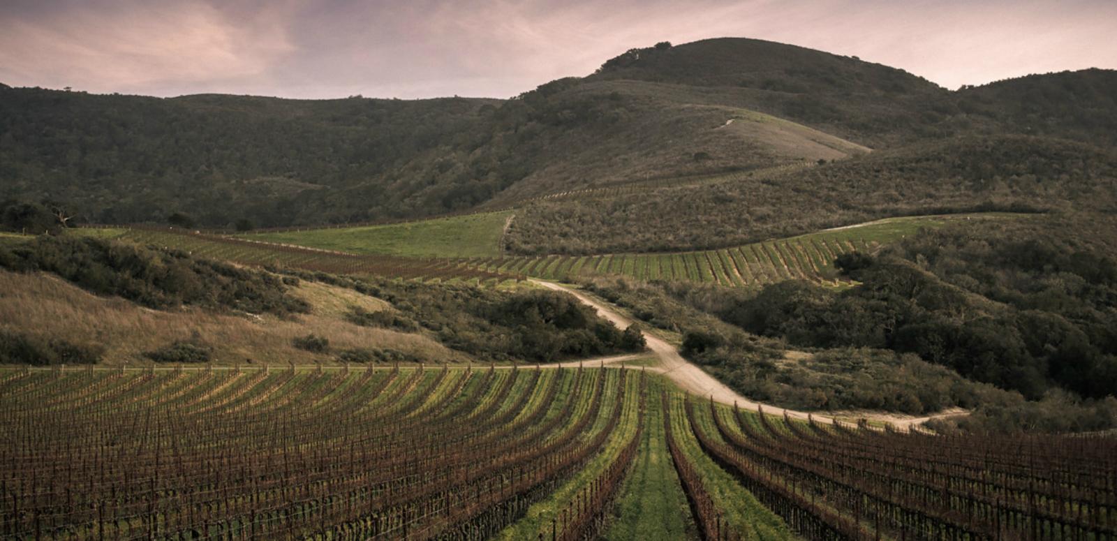 Santa Rita Hills AVA -1