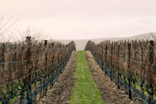 Sustainability - Sustainability in the Vineyards